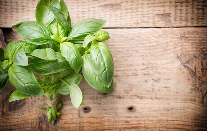15. Basil Leaves