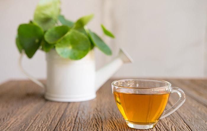 17. Chinese Herb - Gotu Kola
