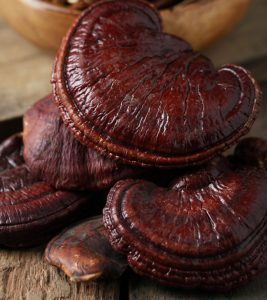 Benefits Of Ganoderma Mushrooms Science Has Uncovered