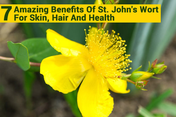 The Amazing Wonders of St. John's Wort Oil for Skin Care - If you like to use plants and herbs for healing purposes, you won't find many plants that will give you the numerous benefits that you get from the St. John's Wort plant. Let's take a look at some of the benefits of St. John's Wort oil, particularly for scars, sunburns and wounds.