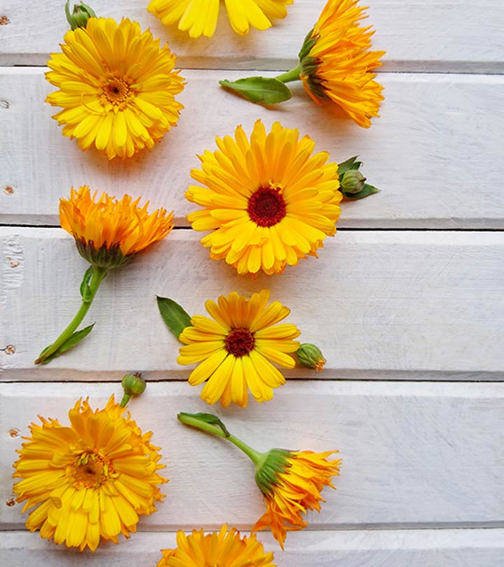 What Is Calendula? How Does It Benefit You?