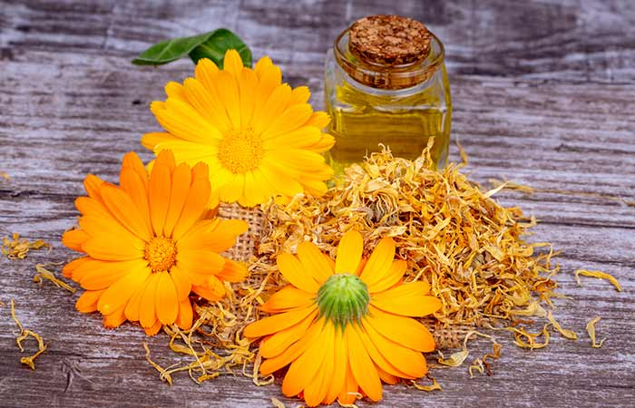 What Is Calendula What Is It Known For