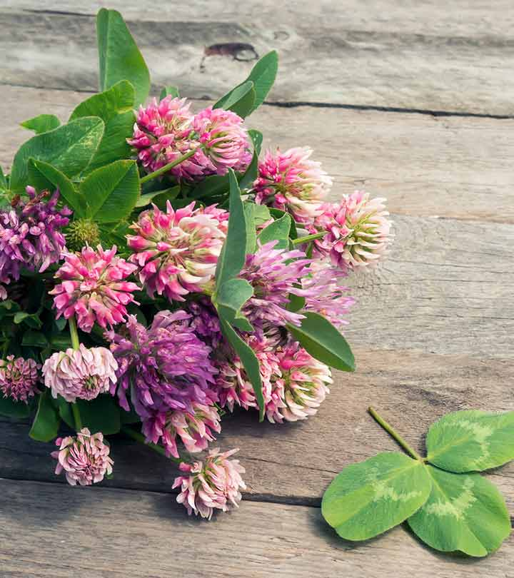 11 Amazing Benefits Of Red Clover For Skin, Hair And Health