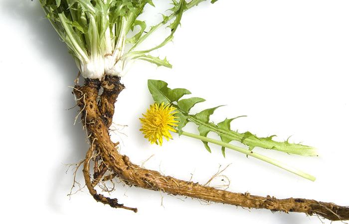 19.-Dandelion-Root-For-Moles