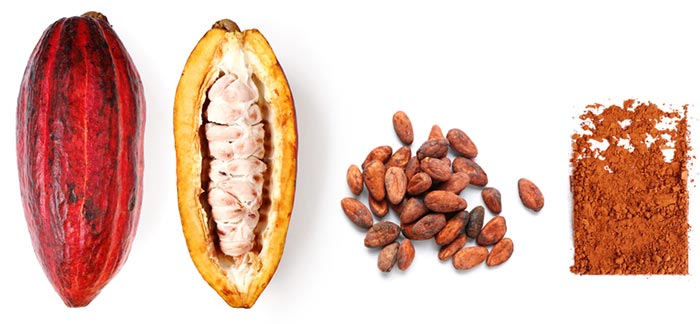 How Is Cacao Processed