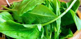 19 Amazing Health Benefits Of Sorrel Leaves