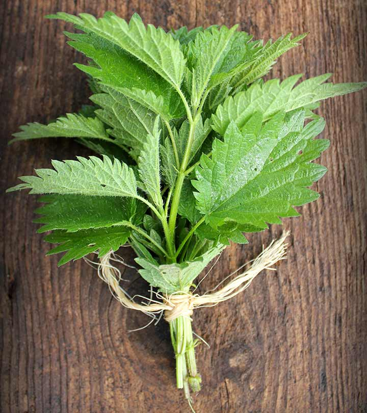 Can Nettle Leaves Cure Allergies? How Are They Good For You?