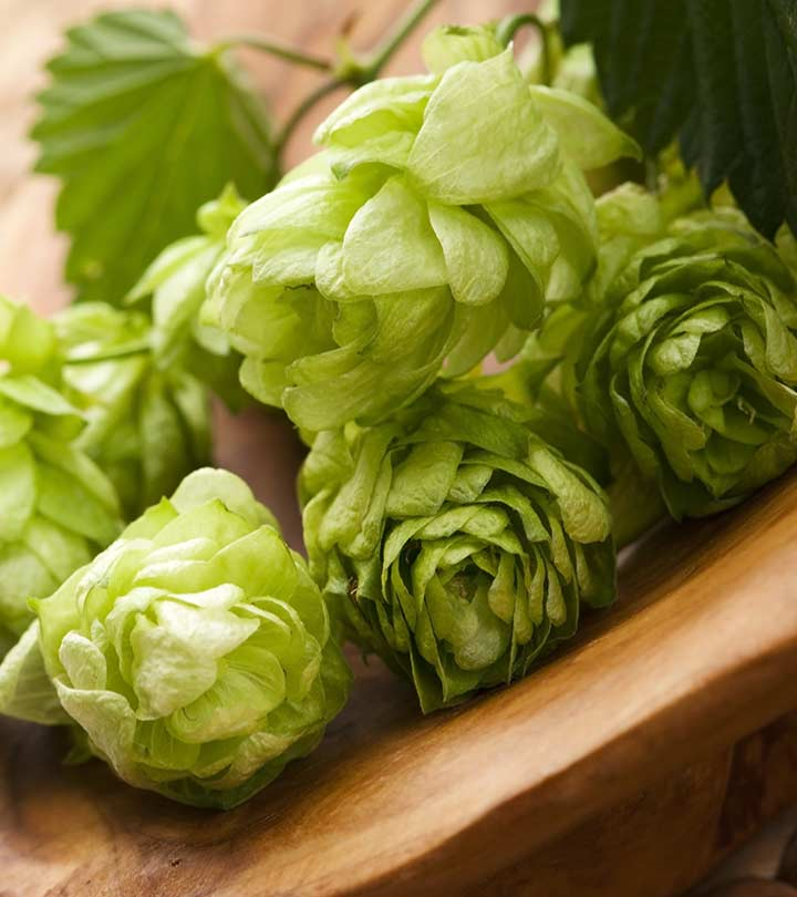 16 Surprising Benefits Of Hops For Skin, Hair And Health