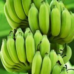 8 Amazing Benefits And Uses Of Green Bananas
