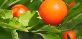 11 Unexpected Side Effects Of Ashwagandha
