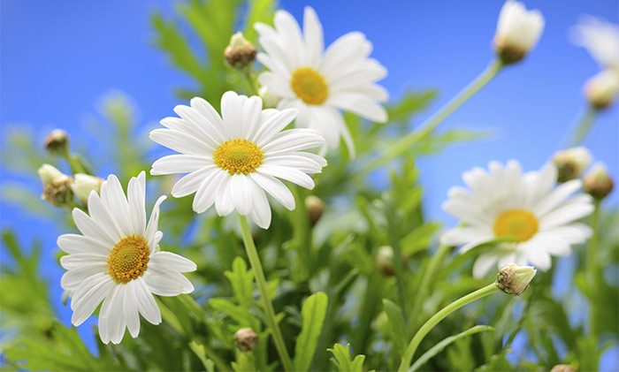 Image: Shutterstock