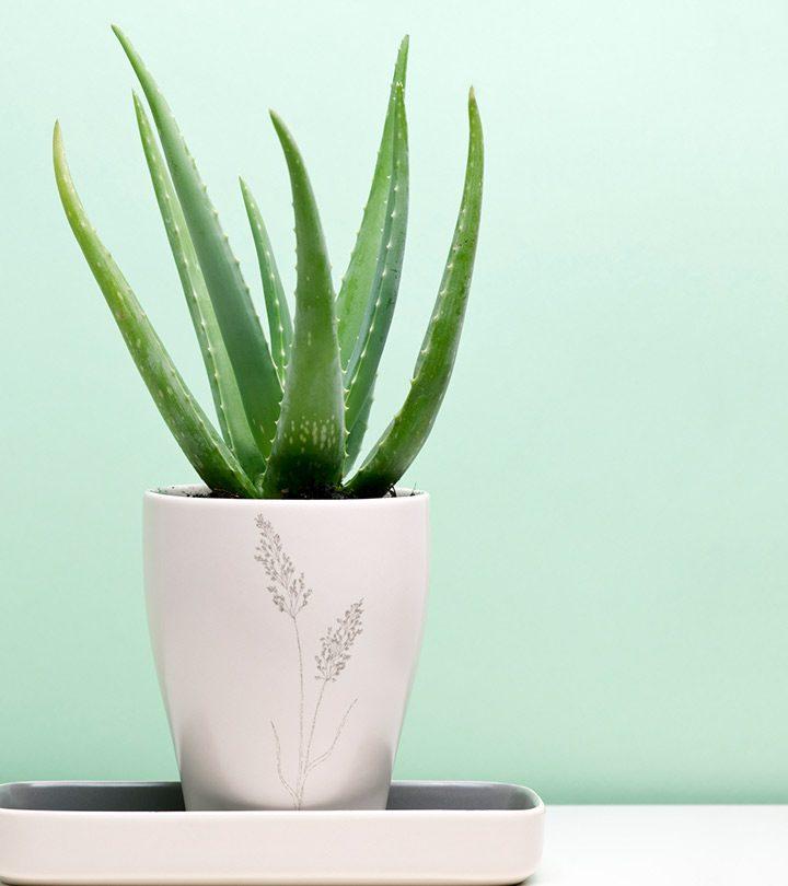 7 Reasons To Use Aloe Vera For Treating Diabetes