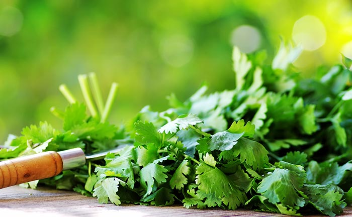 Side Effects Of Cilantro