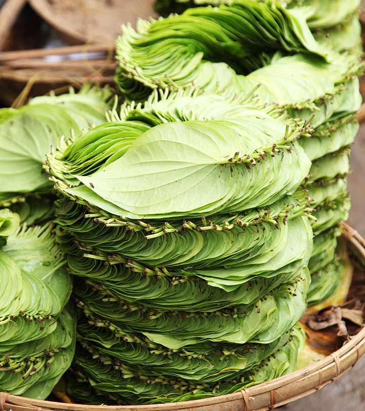 23-Amazing-Medicinal-Uses-Of-Betel-Leaf-(Paan-Ka-Patta)