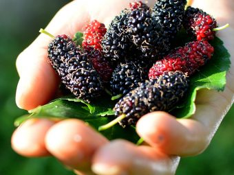 Unexpected-Side-Effects-Of-Mulberry