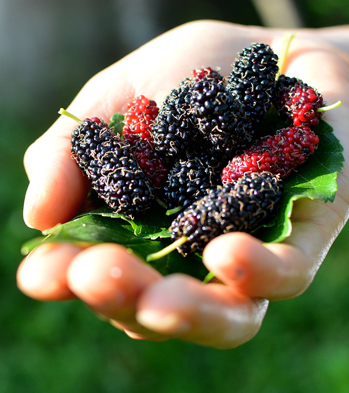 6 Unexpected Side Effects Of Mulberry