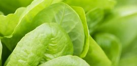Best Benefits Of Lettuce (Kasmisaag) For Skin, Hair And Health