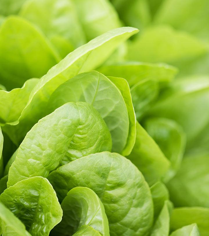 Best Benefits Of Lettuce (Kasmisaag) For Skin, Hair And Health