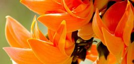 20 Most Beautiful Flowers That Are Commonly Available In India