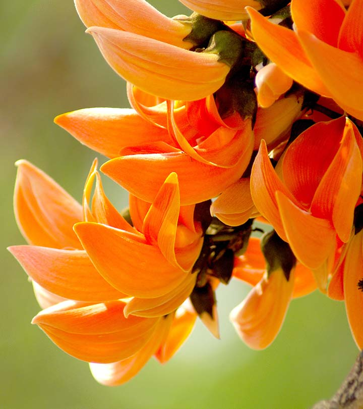 20 most beautiful flowers that are commonly available in india mightylinksfo