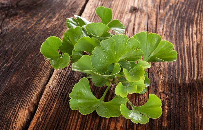 Home Remedies For Cellulitis - Ginkgo Biloba