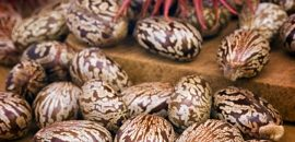 15-Amazing-Health-Benefits-And-Uses-Of-Castor-Seeds