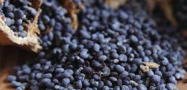 15 Amazing Benefits Of Poppy Seeds (Khus Khus)