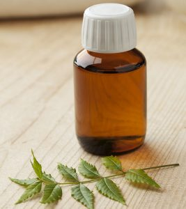 Is Neem Oil Helpful To Treat Scabies?