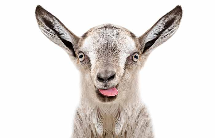 Goat milk - Because, after all, maee is better than moo. Isn't it