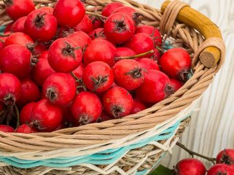 10 Amazing Health Benefits Of Hawthorn
