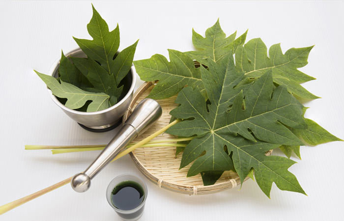 2.-Papaya-Leaves-For-Chikungunya