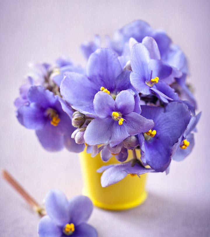 Image result for Beautiful Violets
