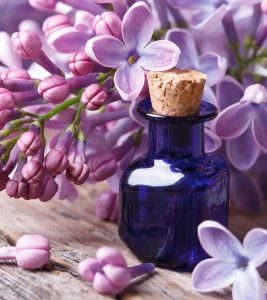 8 Amazing Benefits Of Lilac Essential Oil