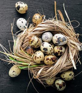Quail Eggs: 18 Important Health Benefits, Nutrition, And Side Effects