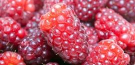 Loganberry