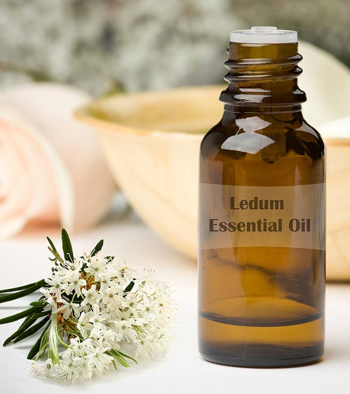 10 Amazing Health Benefits Of Ledum Essential Oil