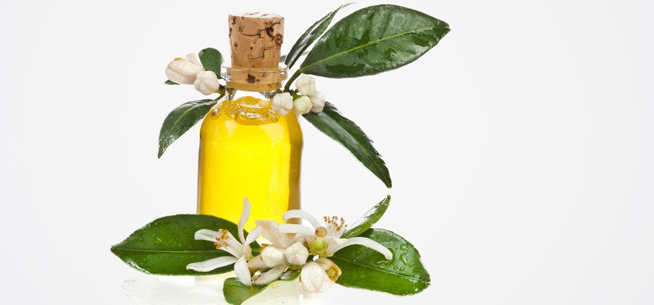 Amyris--oil