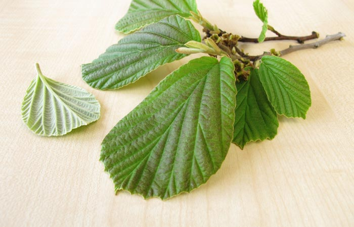 Home-Remedies-To-Treat-Keratosis-Pilaris4