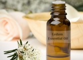 ledum-essential-oil