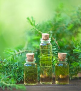 Tea Tree Oil For Warts: Benefits, How To Use, And More