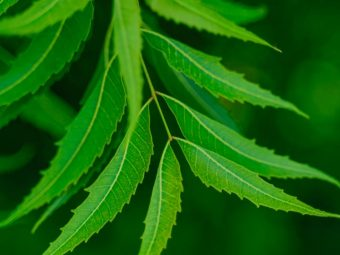 8 Side Effects Of Neem You Should Be Aware Of