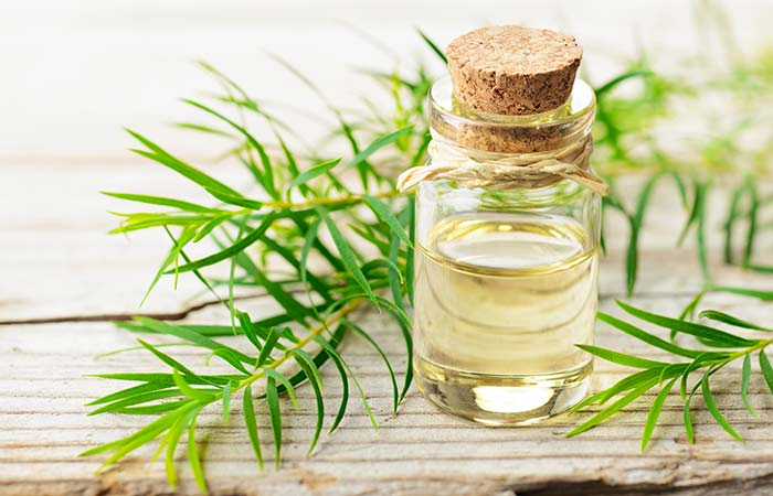 Tea Tree Oil For Scabies: Does It Really Work On Scabies Mites?