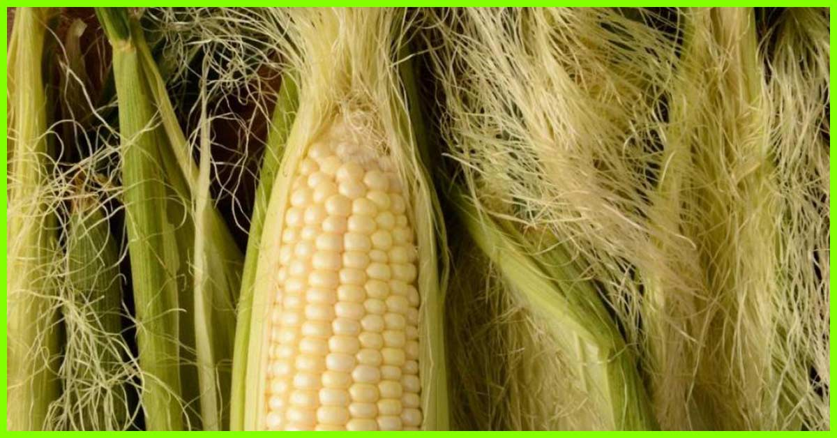 10 Amazing Benefits Of Corn Silk