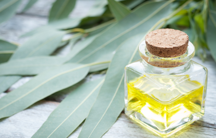 16.-Eucalyptus-Oil-For-Cold-Sores