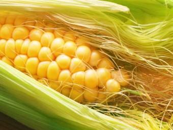 Corn-Silk