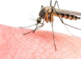 Must Know About The Zika Virus