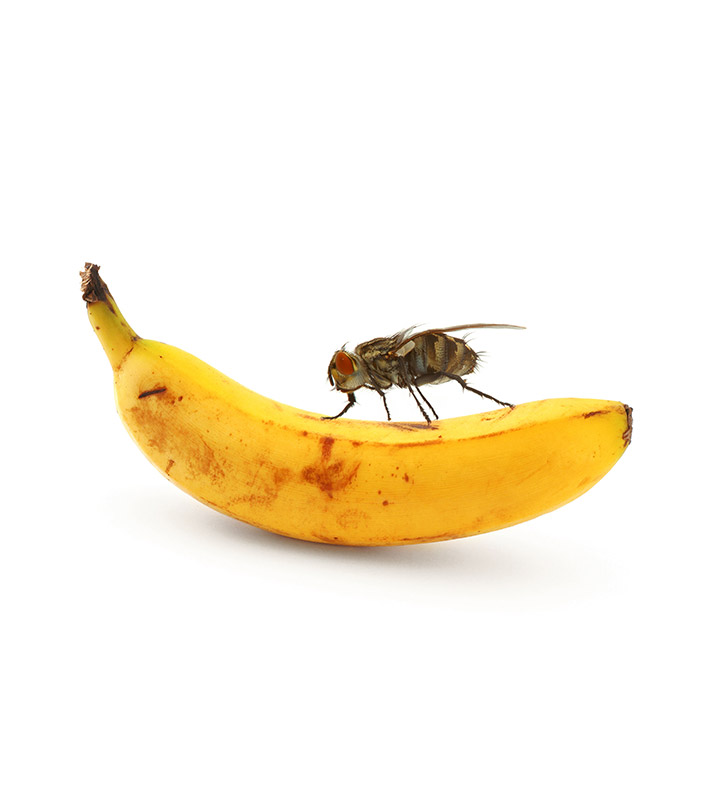 How To Get Rid Of Fruit Flies – 6 Ways To Combat Fruit Flies + Prevention Tips