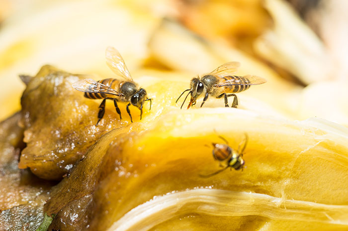how healthy are fruits how to get rid of fruit flies