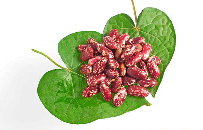 Kidney Bean Leaves