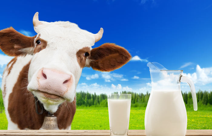 Benefits-Of-Cow-Milk-According-To-Ayurveda